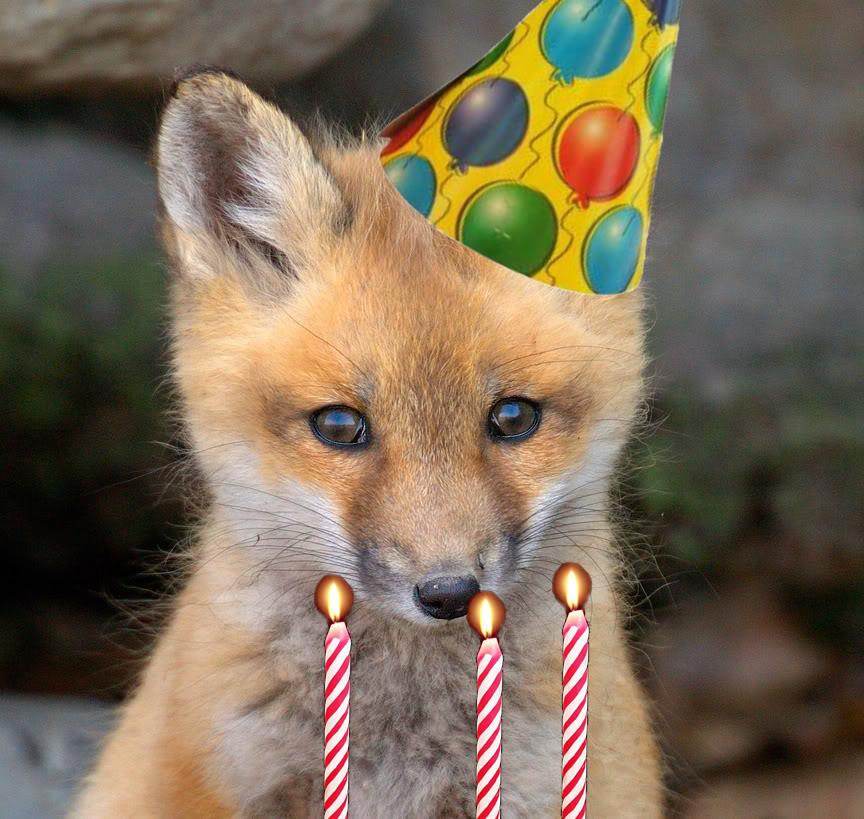 Birthday Fox.jpg