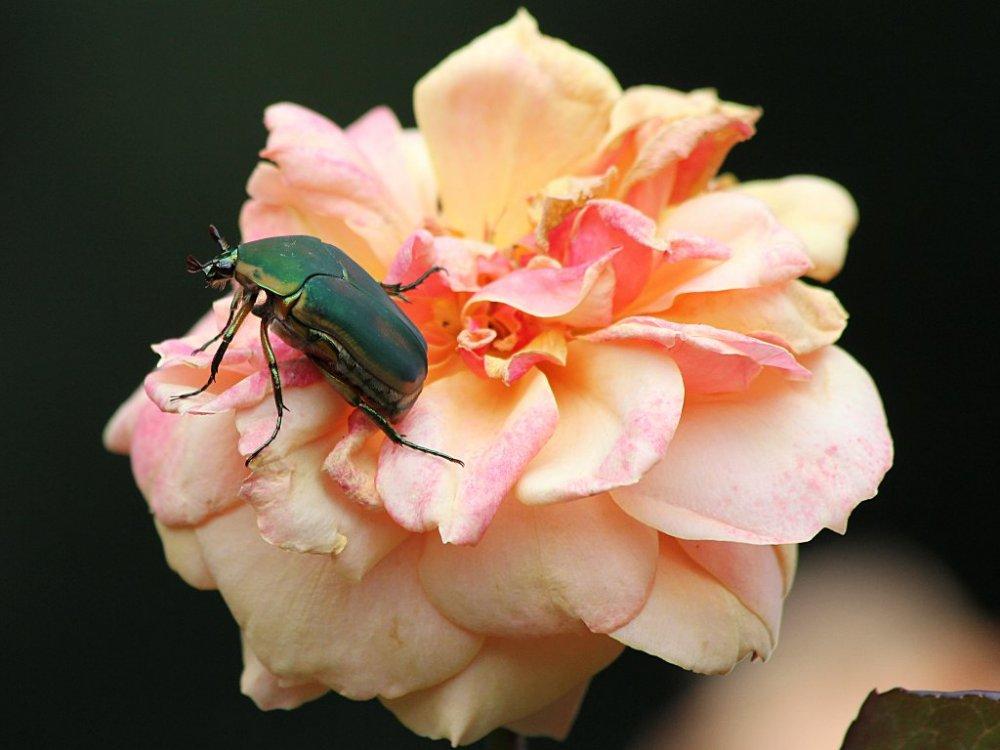 bugs of raleigh 02 2014-08-09.jpg