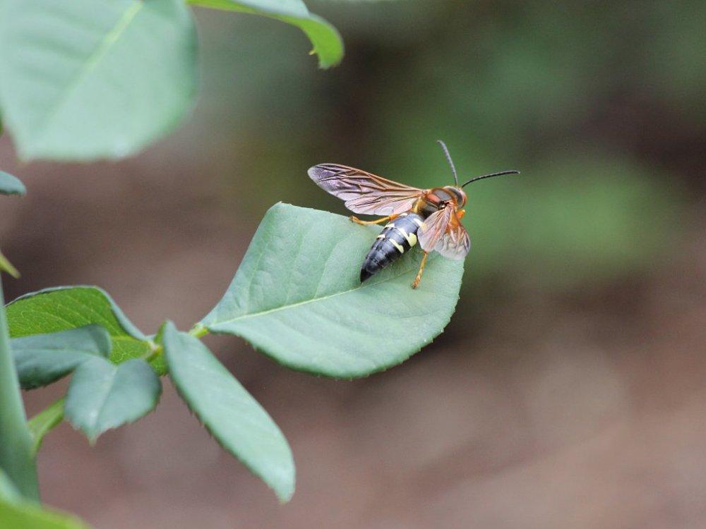 bugs of raleigh 03 2014-08-09.jpg