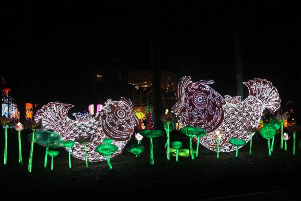 chinese lanterns 2018-11-29-01.jpg