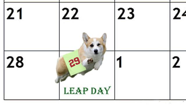 Cool Corgi Leap Year.jpg