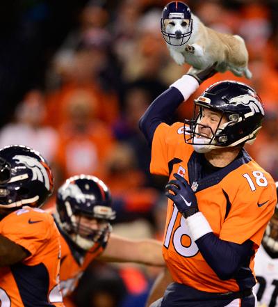Cool Corgi Peyton Manning.jpg