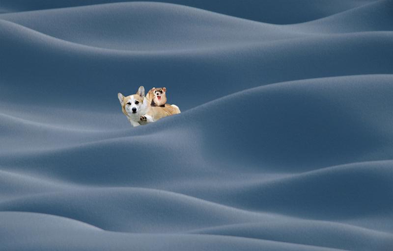 Cool Corgi With Ferret In Snow.jpg