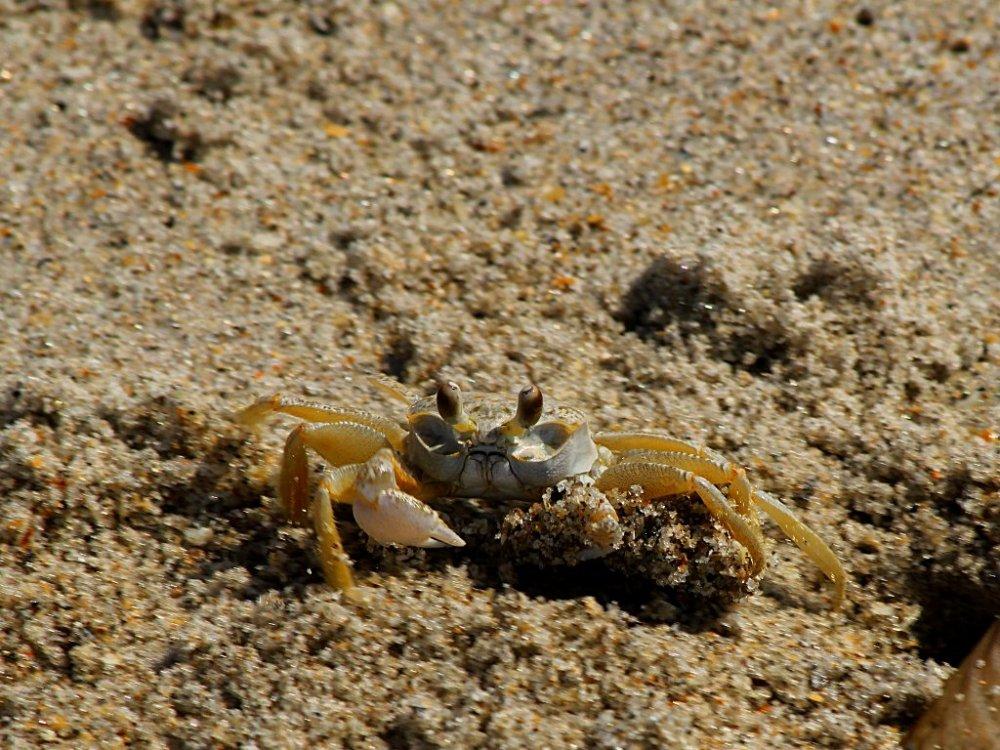 crab 2016-06-28-01.jpg