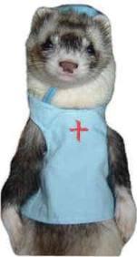 doctor ferret.png