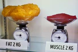 Fat-Muscle.jpg