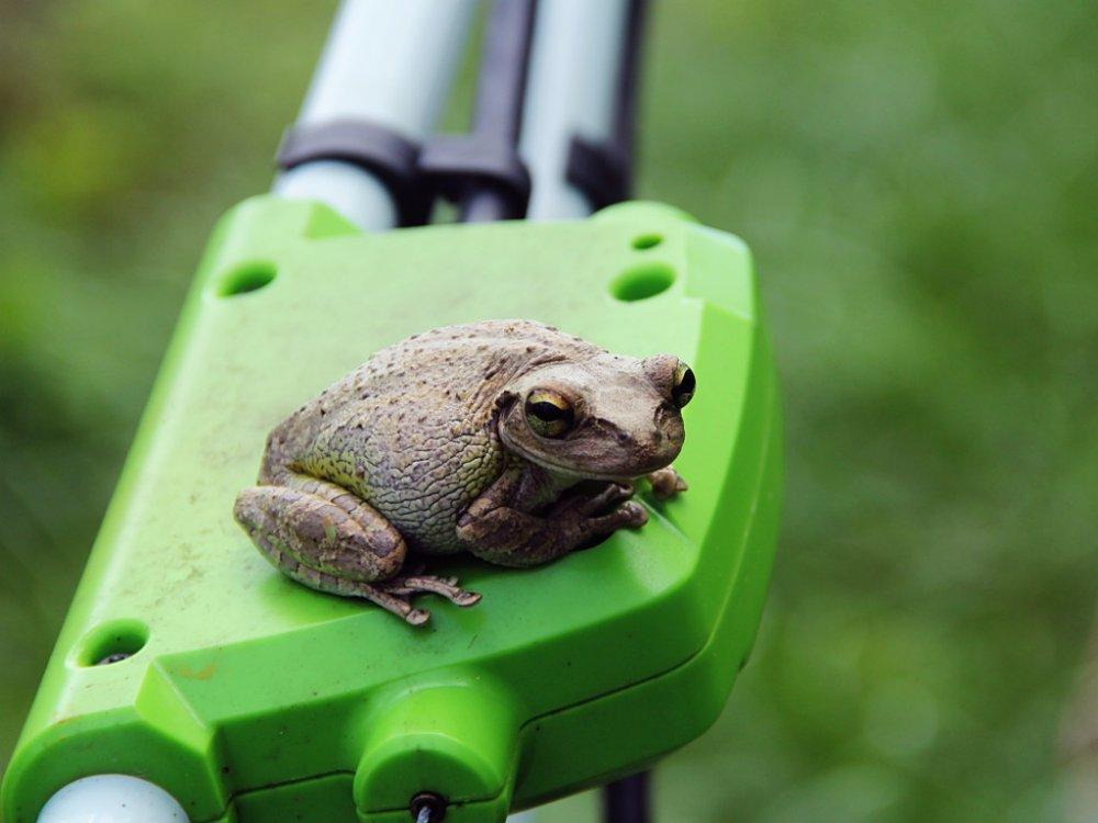 frog on lawn mower.jpg