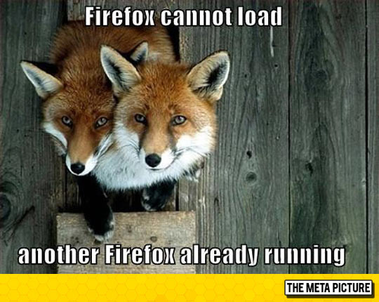 funny-fox-firefox-heads.jpg