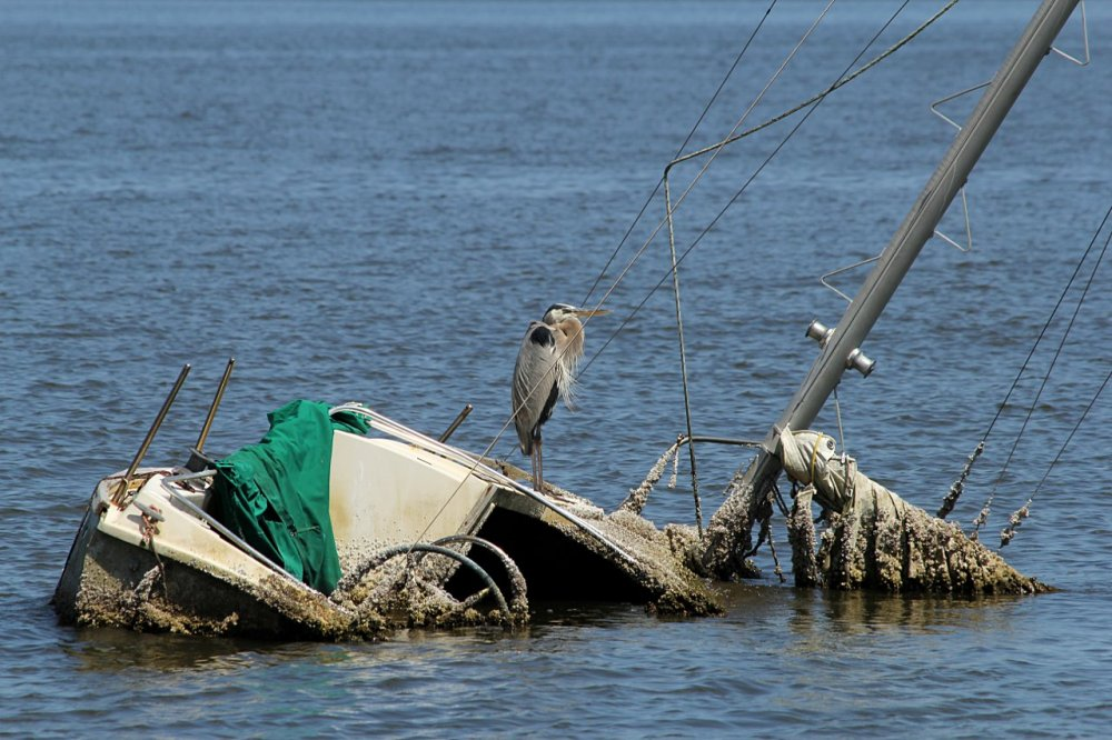great blue heron down with the ship.jpg