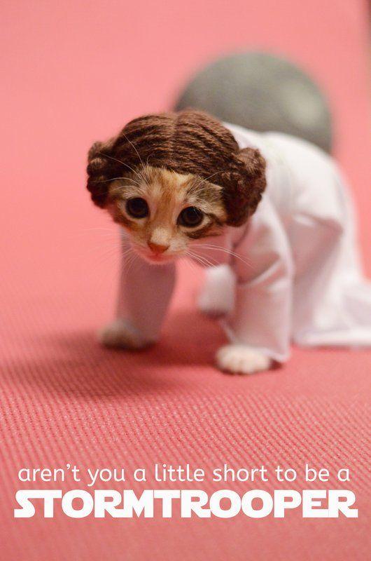 leia kitten.jpg