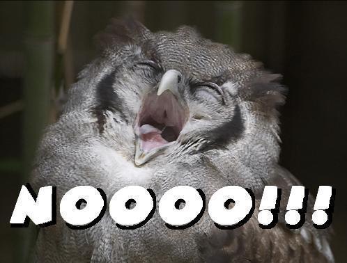 Owl Noooo.jpg