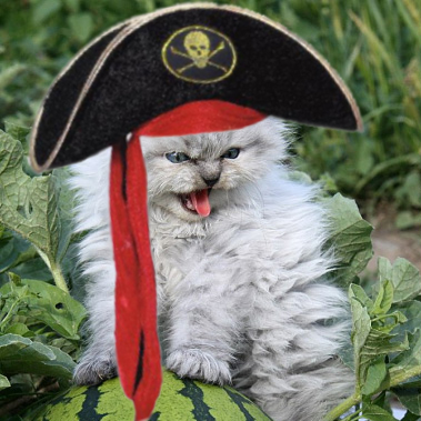 Pirate Kitty 1.jpg