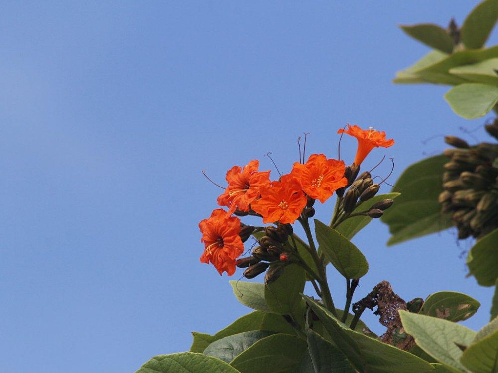 red flowers 2020-05-17.jpg