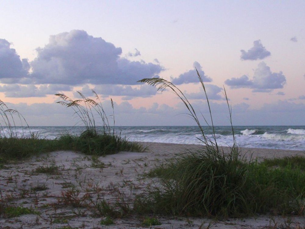 sea oats at dusk.jpg