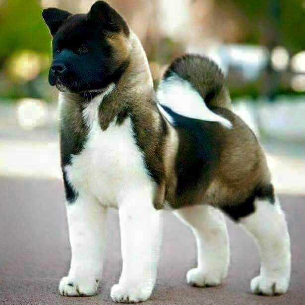sentrydog.jpg