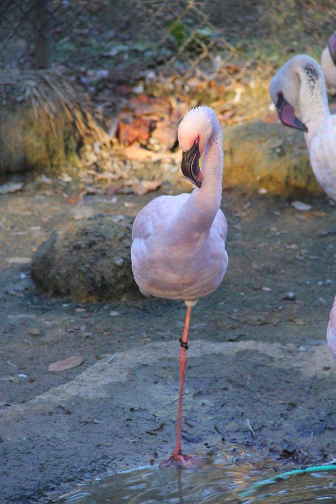 sylvan flamingo 2017-11-24-01.jpg