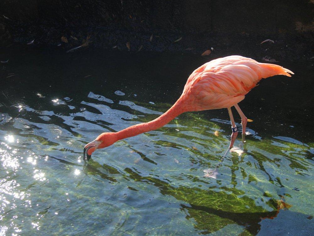 sylvan flamingo 2017-11-24-02.jpg